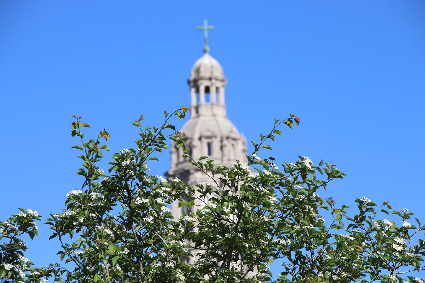 Top of a tree with the Church of Immaculate Conception in the back