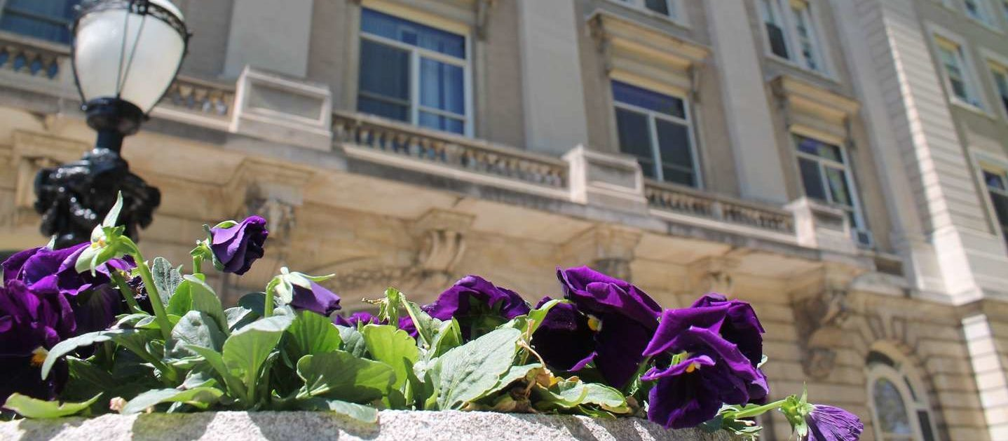 Purple flowers in front of Guerin Hall