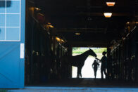 Silhouette of a student and a horse in the barn