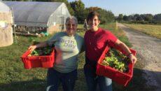 Two volunteers at WVC hold bins of freshly picked veggies.