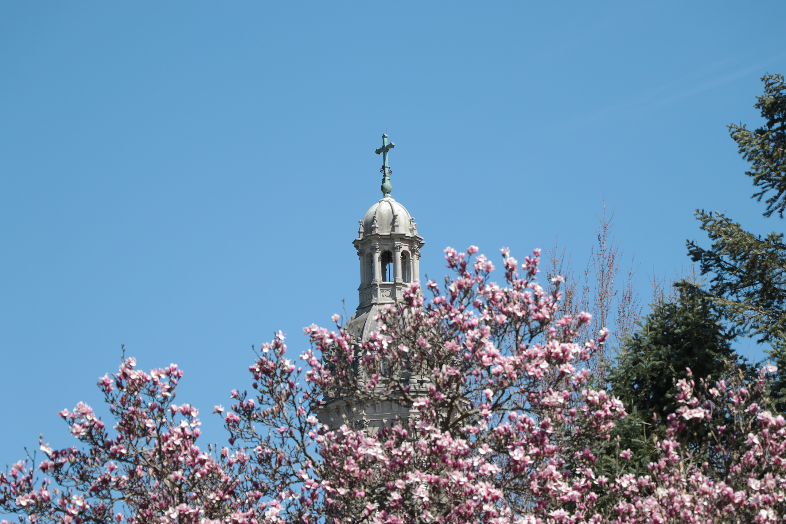 Church with magnolias