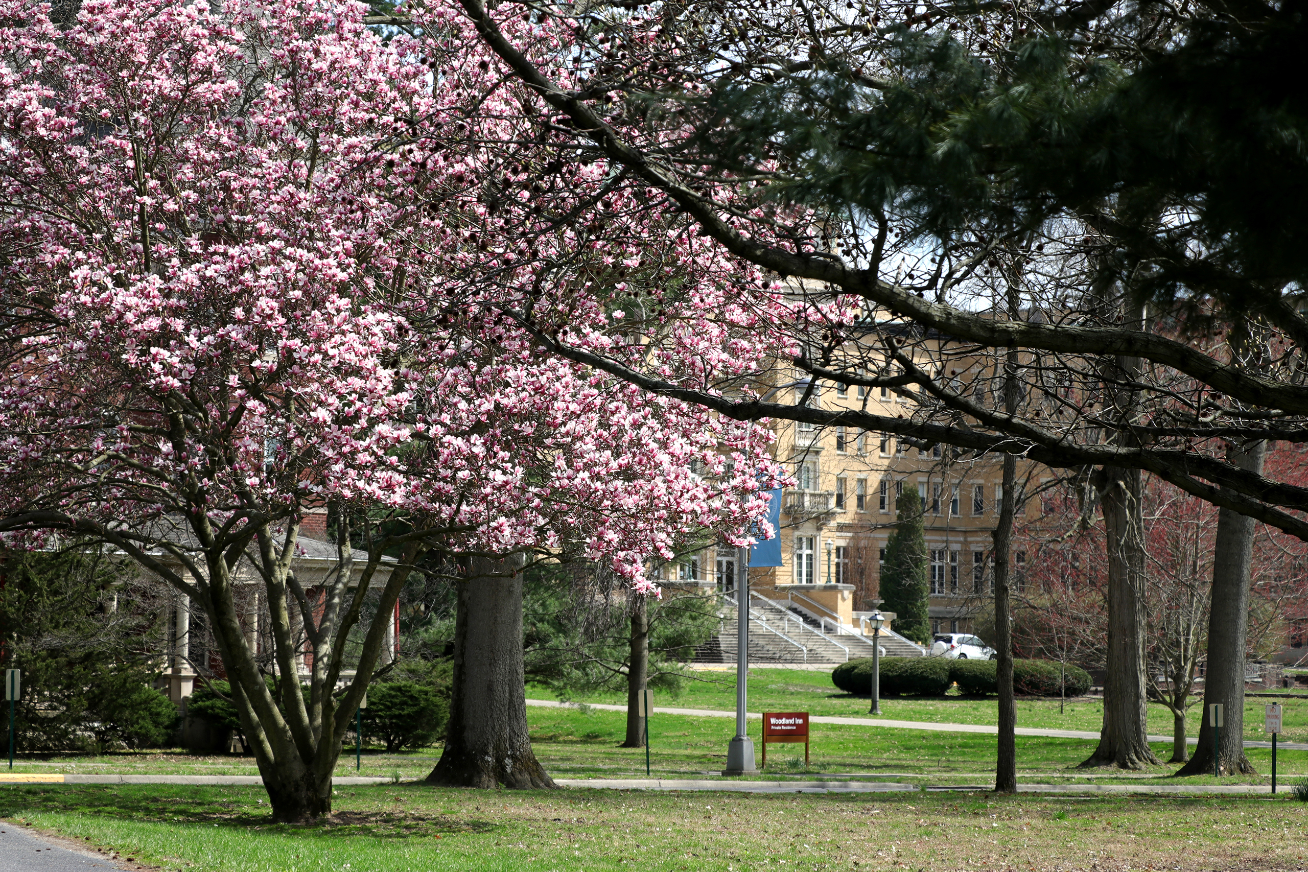 Le Fer Hall with magnolias