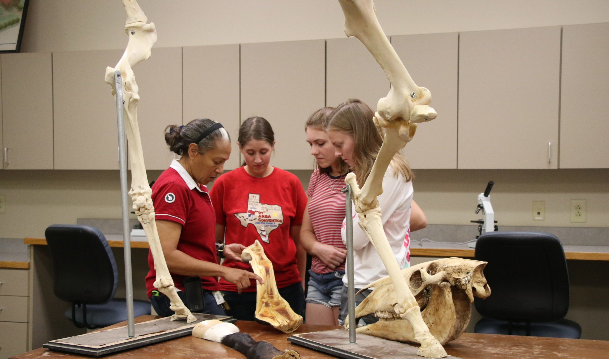 Students talking to professor in equine anatomy class