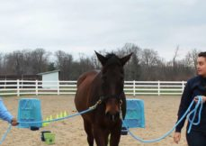 Equine Assisted Therapy Minor